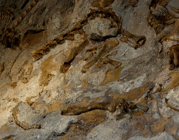 A picture of dinosaur fossils in the Morrison Formation (2 of 3)