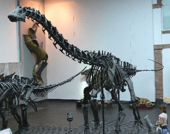 A photo of a Diplodocus exhibit at an unknown museum.