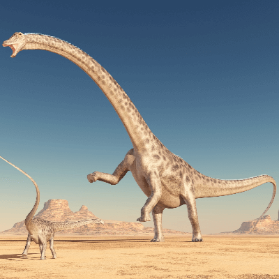 A Picture of Diplodocus Longus