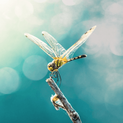A Picture of a Dragonfly