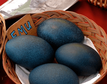 A picture of emu eggs
