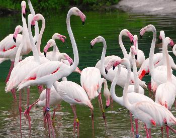 A photo of flamingos at Disney World