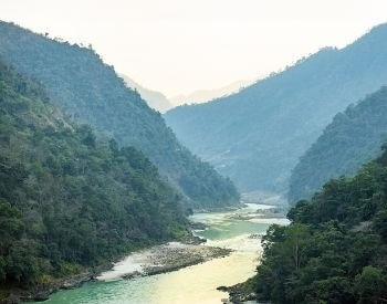 A picture of the Ganges River flowing in a forest