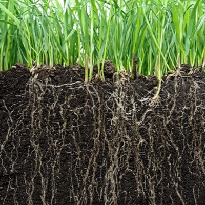 A Picture of Grass, Roots and Soil