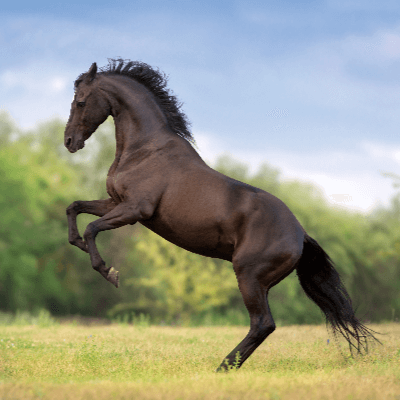 A Picture of Horse