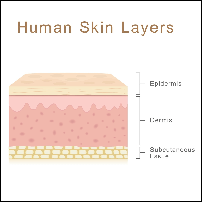 A Diagram of the Human Skin