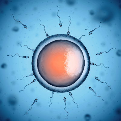 A Picture of a male sperm and female egg