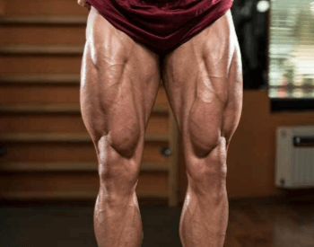 A picture of the upper leg muscles (quads) of a human