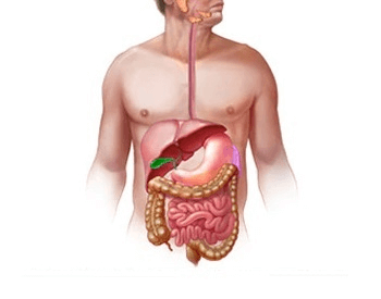 An illustration of all the organs that make up the human digestive system