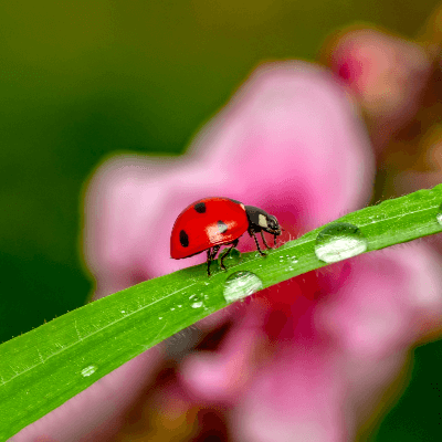 A Picture of a Ladybug