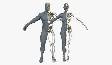 A diagram that compares the male and a female skeleton