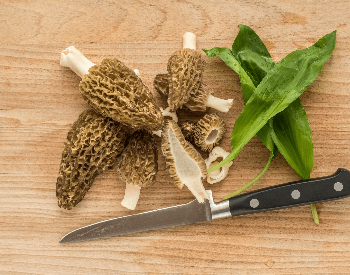 A picture of morel mushrooms