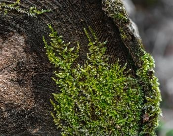 A picture of moss on a log