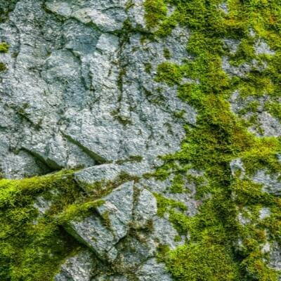A Picture of Moss on a Rock