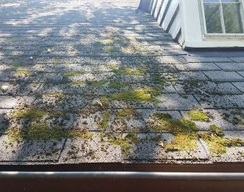 A picture of moss on a roof