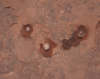 A picture of multiple dinosaur eggs found in Arizona