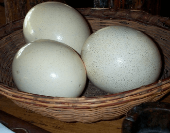 A picture of ostrich eggs
