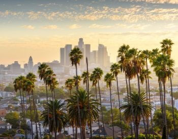A picture of some palm trees and the Los Angeles skyline