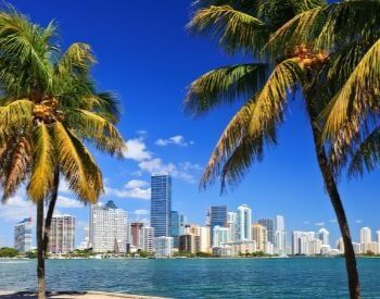 A picture of some palm trees and the Miami skyline