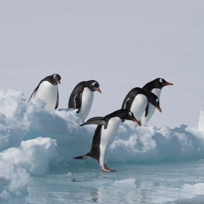 A Picture of some Penguins