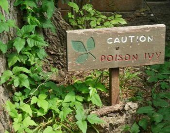 A picture of a posion ivy warning sign