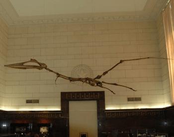 A Pterodactyl Museum Exhibit