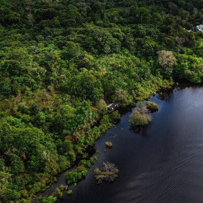 A Picture of the Amazon Rainforest