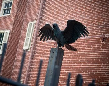 A picture of a raven statue outside of Edgar Allan Poe's old house