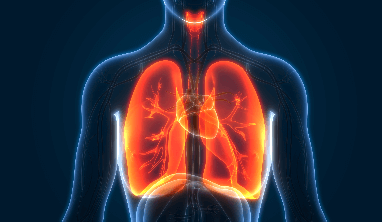 Respiratory System Facts for Kids