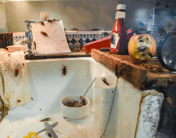 A picture of a kitchen that's infested with cockroaches.