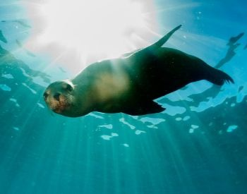 A picture of a sea lion