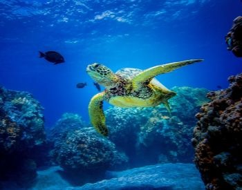 A picture of a sea turtle