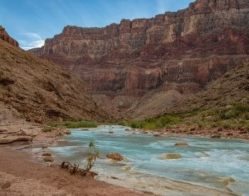 A picture of the shoreline along the Colorado River