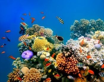 A picture of small fish swimming around a coral reef