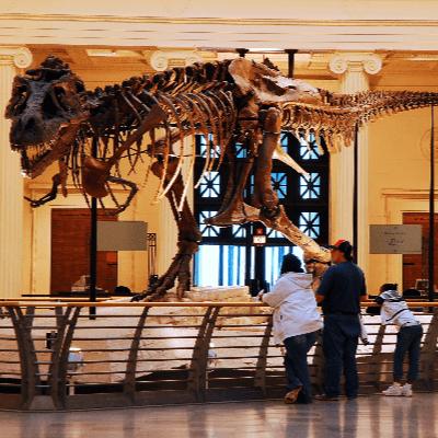 Sue (FMNH PR 2081) Tyrannosaurus Rex