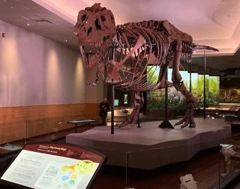 Sue Tyrannosaurus Rex Skeleton At Chicago Field Museum