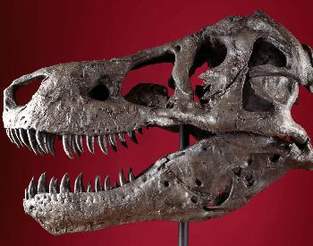 Sue's skull (Specimen FMNH PR 2081)