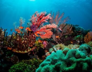 A picture showing the beautiful landscape of a coral reef