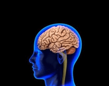 An illustration of the brain in a human head
