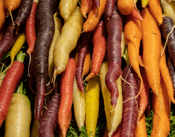 A picture of the different carrot colors