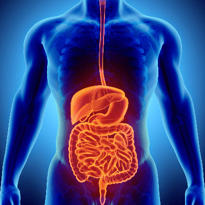 A Picture of the Digestive System