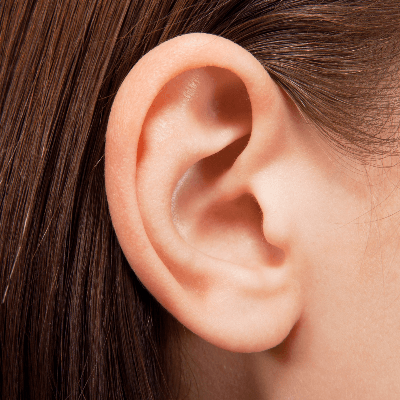 A Picture of the Human Right Ear