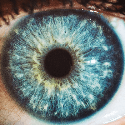 A Picture of the Human Eye