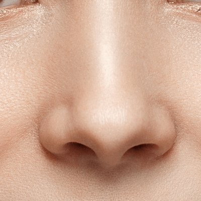 A Picture of the Human Nose