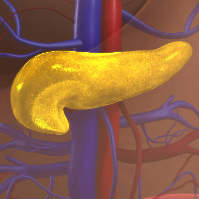 A Picture the Human Pancreas