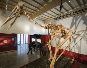 A Pterodactyl Museum Exhibit of the Largest Specimen Ever Found