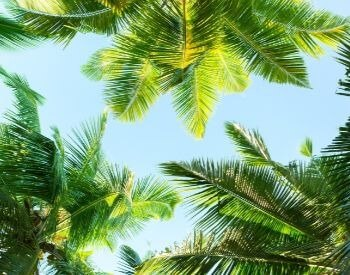 A picture of the leaves of a few diffferent palm tree