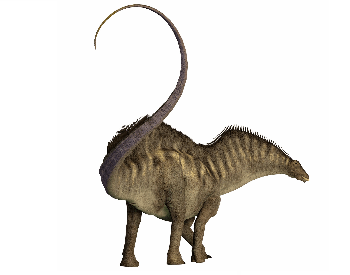 A picture of a Amargasaurus's tail from the back