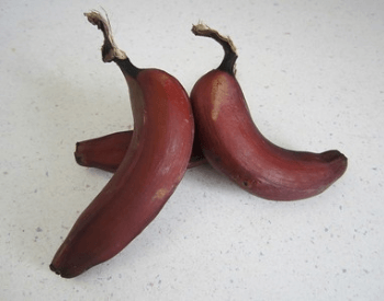 A picture of three single red bananas