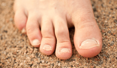 Toenail Facts for Kids